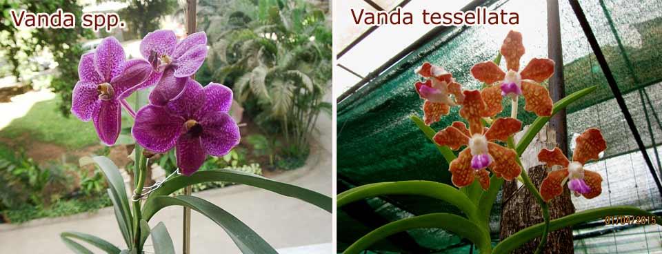 About Nandan
